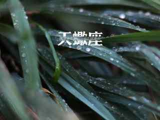 绿叶水珠非主流文字天蝎座星座壁纸
