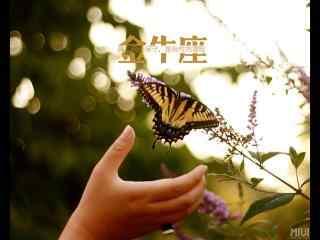 金牛座文艺植物蝴蝶桌面壁纸