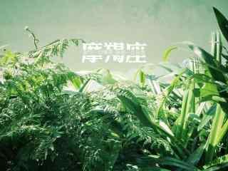 摩羯座唯美小清新绿叶桌面壁纸
