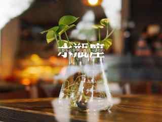 水瓶座小清新植物