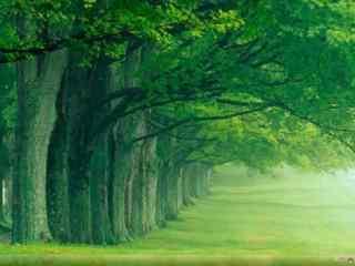 绿色养眼大树win7电脑主题
