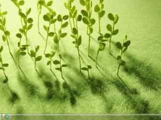 成排的绿色小嫩芽