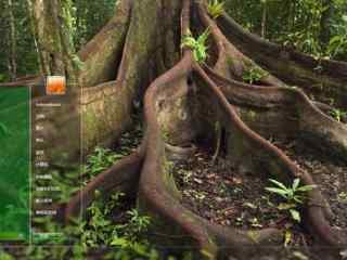 大树树根特写高清
