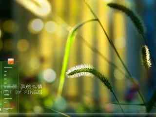 清新风景狗尾巴草