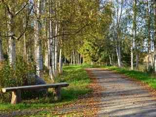 白桦林中的羊肠小道风景win8桌面壁纸