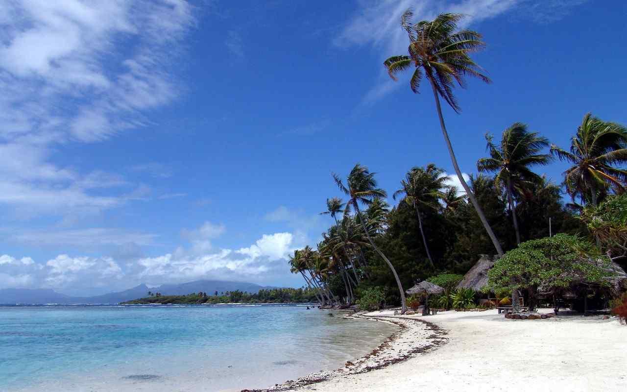 海边椰林唯美win8桌面壁纸