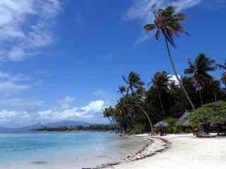 海边椰林唯美win8
