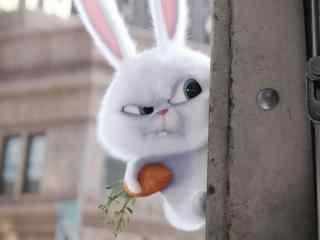 愤怒的抱着萝卜的小白兔win8桌面壁纸