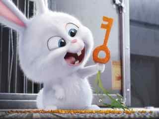 呆萌小兔子和猫win8桌面壁纸